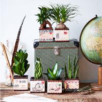 Airmail Pot + Free 9cm Plant