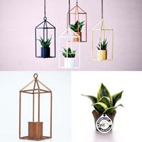 Greenhouse - Copper 6cm Pot