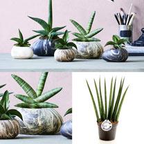 Stone Plant Container - 18cm