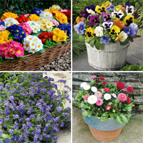Beautiful Bedding Plants - Our Selection