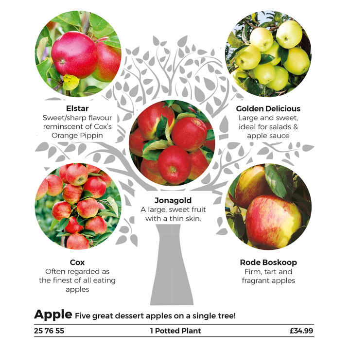 Gourmet Fruit Tree - Apple