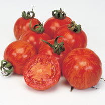 Grafted Tomato Lycostandard