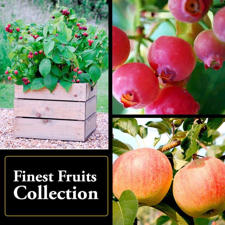 'Finest Fruits' Collection