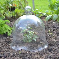 Bell Glass Cloche - Medium