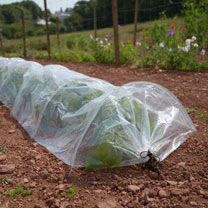 Tunnel  Polythene