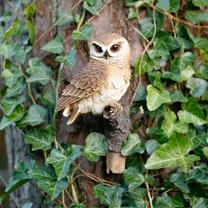 Perching Owl