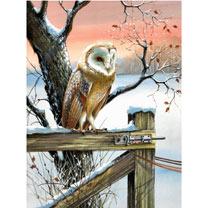 Christmas Owl Christmas Cards