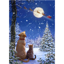 Waiting For Santa Christmas Cards