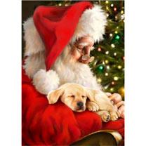 Santa's Here Christmas Cards