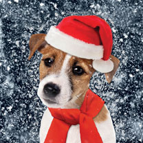 Jack Russell - Christmas Cards