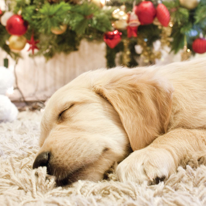 Nap Time - Christmas Cards