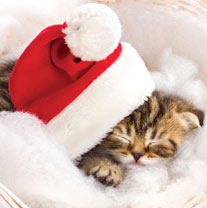 Sleeping Kitten in Santa Hat - Christmas Cards
