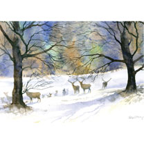 Winter's Sky in the Park - Christmas Cards