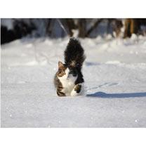 Snowy Paws - Christmas Cards