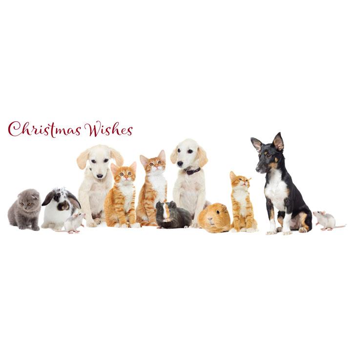 Christmas Companions - Christmas Cards
