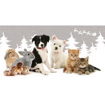 Furry Friends Cards