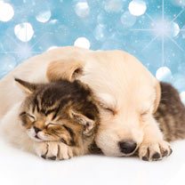 Christmas Dreams Cards - 10
