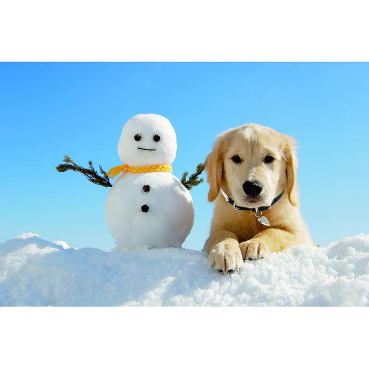 Snowy Christmas Cards
