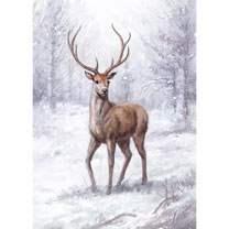 Stag in the Snow Cards