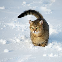 Cat in the Snow Cards