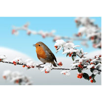 Christmas Robin Cards