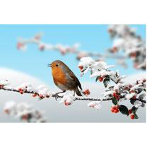 Christmas Robin Cards - 10