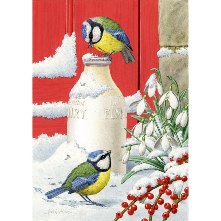 Blue Tits at Christmas Card