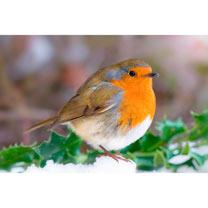 Snowy Robin Cards