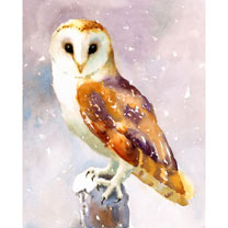 Christmas Owl Cards