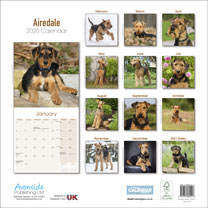 Dog Breed Calendar - Airedale