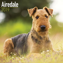 Dog Breed 2019 Calendar - Airedale