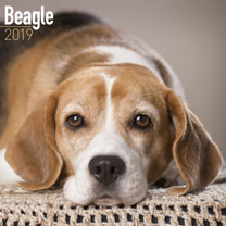 Dog Breed 2019 Calendar - Beagle