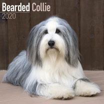 Dog Breed Calendar - Bearded Collie