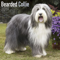 Dog Breed 2019 Calendar - Bearded Collie