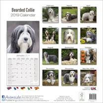 Dog Breed 2019 Calendar - Bearded Collie
