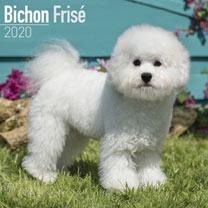 Dog Breed Calendar - Bichon Frise