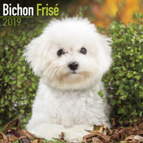 Dog Breed 2019 Calendar - Bichon Frise