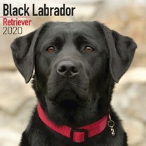 Dog Breed Calendar - Black Labrador Retriever