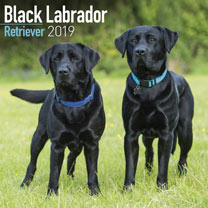 Dog Breed 2019 Calendar - Black Labrador Retriever