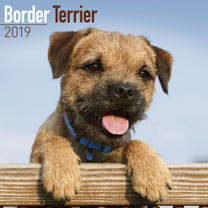 Dog Breed 2019 Calendar - Border Terrier