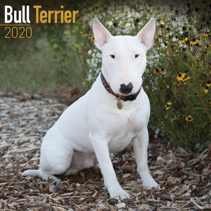 Dog Breed Calendar - Bull Terrier