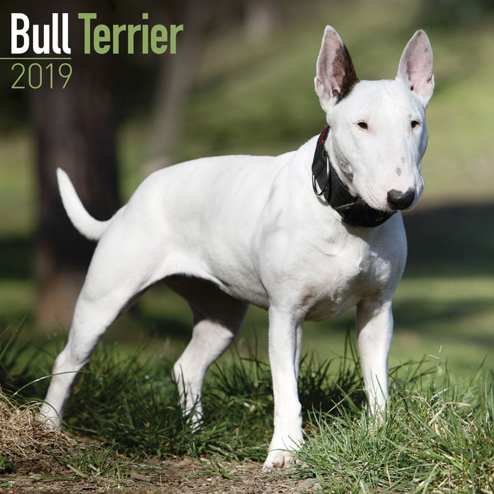 Dog Breed 2018 Calendar - Bull Terrier