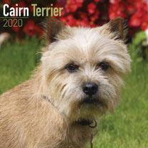 Dog Breed Calendar - Cairn Terrier