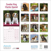 Dog Breed Calendar - Cavalier King Charles Spaniel