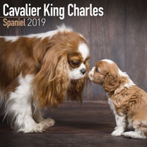 Dog Breed 2018 Calendar - Cavalier King Charles Spaniel