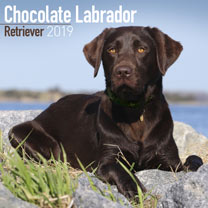 Dog Breed 2018 Calendar - Chocolate Labrador Retriever
