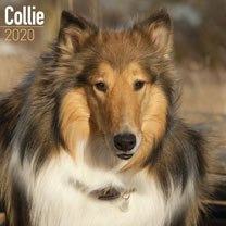 Dog Breed Calendar - Collie