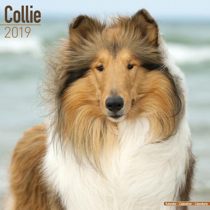 Dog Breed 2018 Calendar - Collie