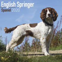 Dog Breed Calendar - English Springer Spaniel