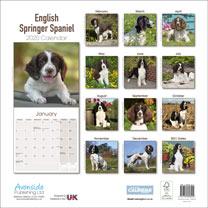 Dog Breed Calendar - English Springer Spaniel
